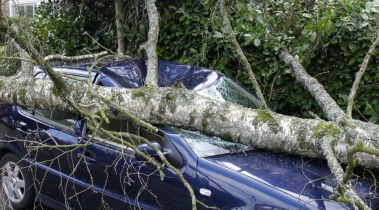storm schade auto geraakt door boom